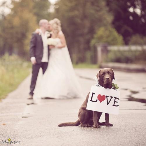結婚式 愛犬と一緒に