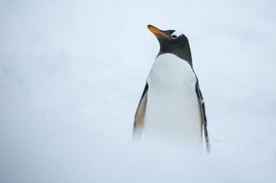 雪とペンギン